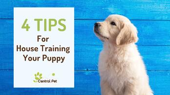 tips for house training your puppy or dog