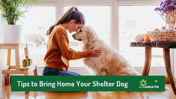 dog owner with shelter dog in home