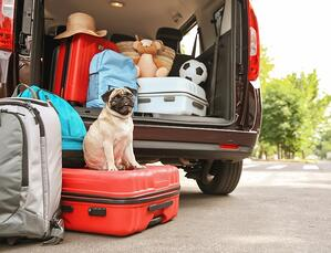 A Checklist for Traveling with Your Dog