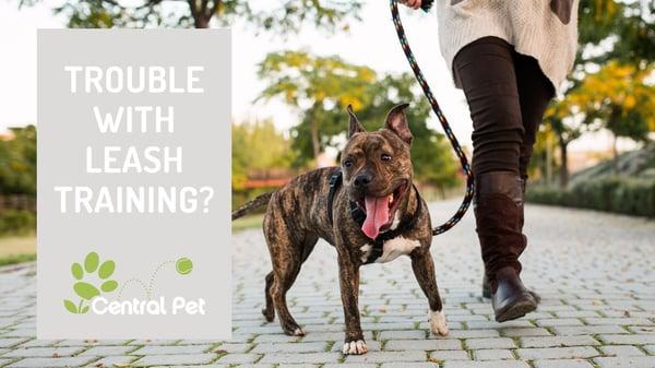 How to Train Your Dog to Walk on a Leash - dog on a leash