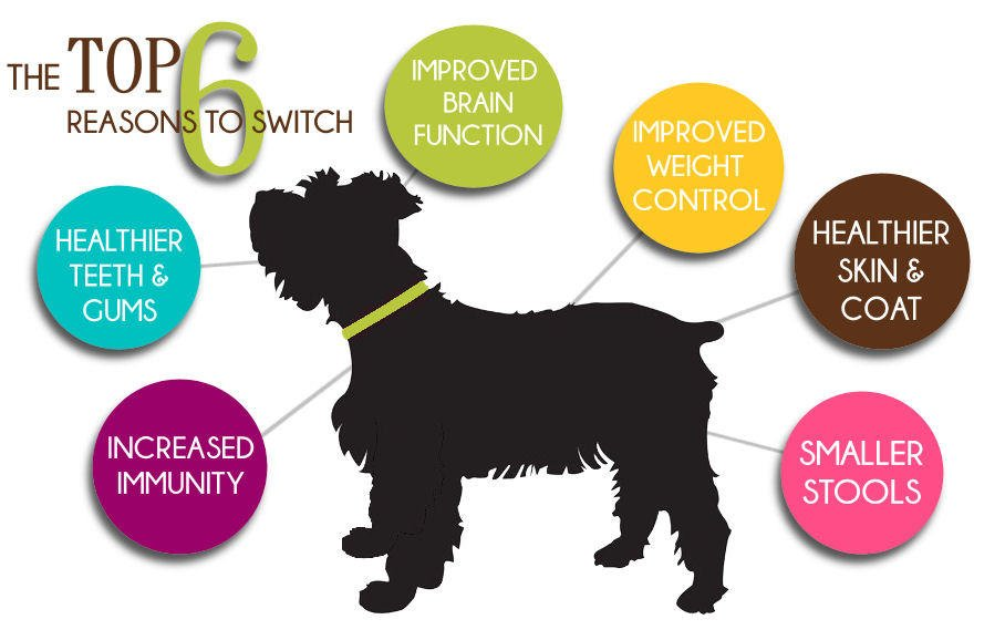 The top 6 reasons to switch to raw dog food. Tucson pet experts
