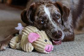 What toys are best for my dog?