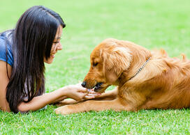 Help your dog with seasonal allergies