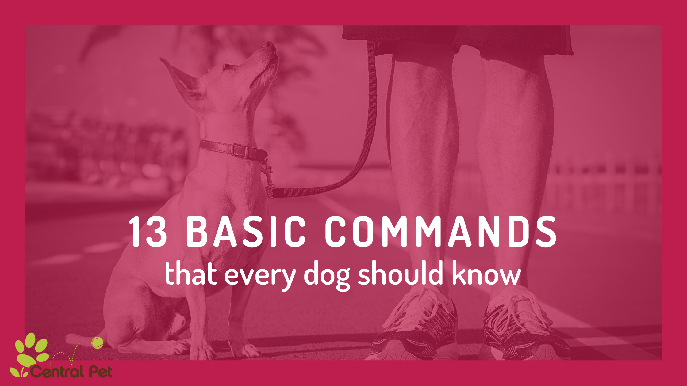 Basic Commands Every Dog (and Dog Owner) Should Know