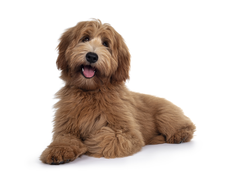 ADA Service Dog Training