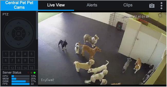 Doggy Daycare Camera