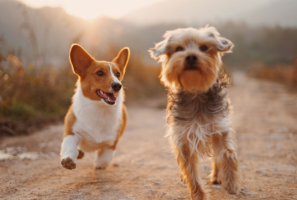 happy dogs going to doggy daycare