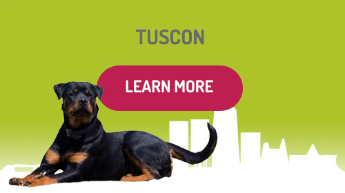 Doggy Daycare Tuscon