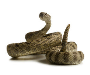Snake Avoidance